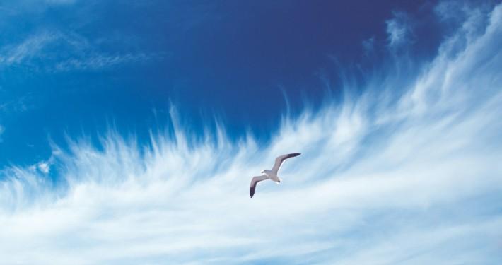 Atem Luft Möwe Wolken Himmel