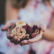 Rosen in Händen