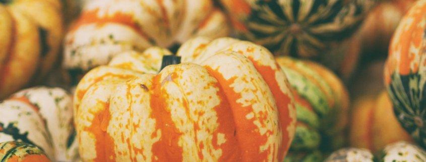 Kürbisse, Erntedank, Fülle des Herbstes