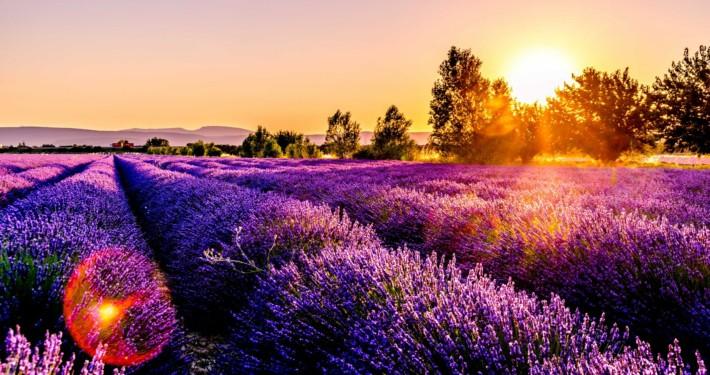 Lavendelfeld, Duft