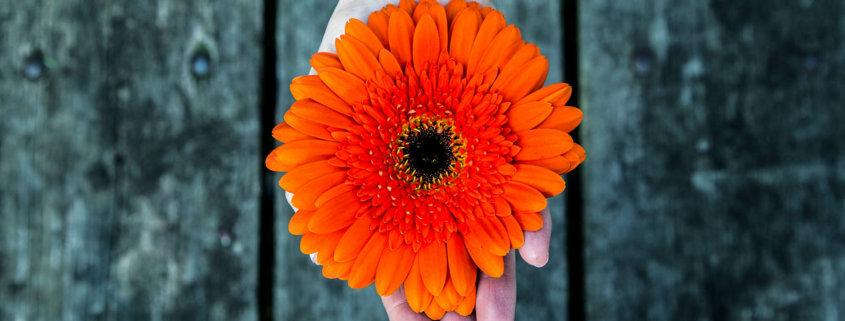 Blume in Händen